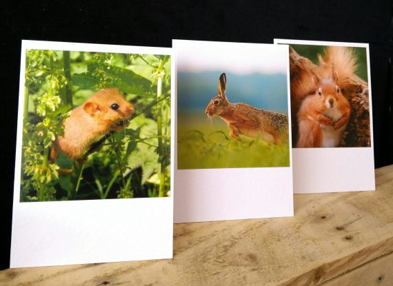 New photo cards now available at Happy Planet