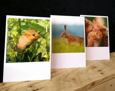 Dormouse, Hare and Red Squirrel